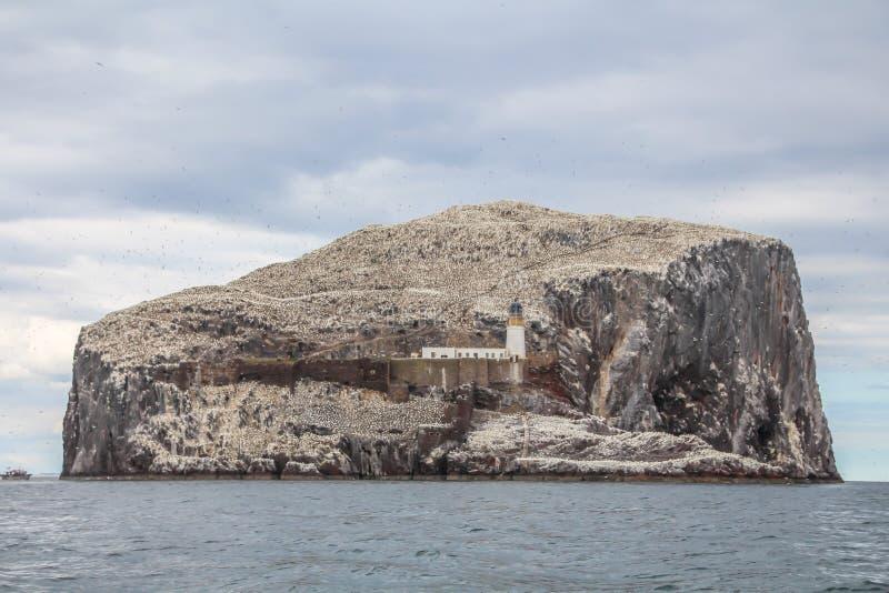 低音岩石,世界的最大的殖民地北Gannets 北部贝里克苏格兰英国 库存照片