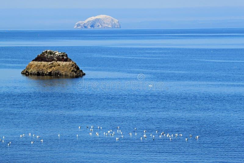 低音dunbar峡湾晃动 免版税库存照片