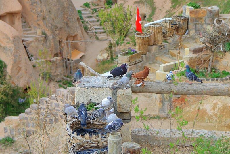 住在传统卡帕多细亚洞解决的鸽子 免版税图库摄影
