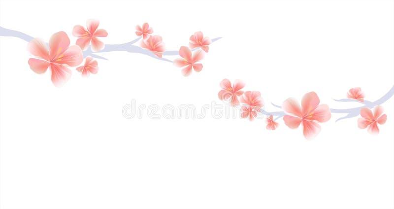 佐仓分支有桃红色花的在白色背景 佐仓花 樱花 传染媒介EPS 10, cmyk 皇族释放例证