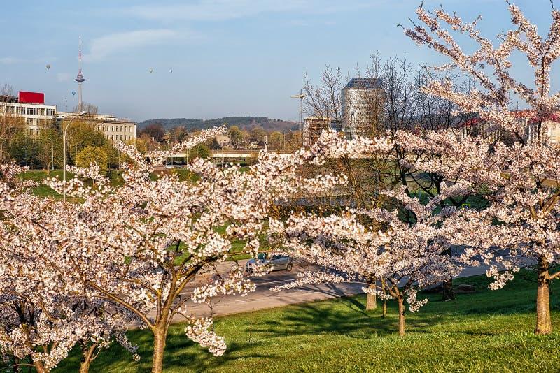 佐仓或樱桃树在春天日本人庭院里开花开花 免版税库存照片