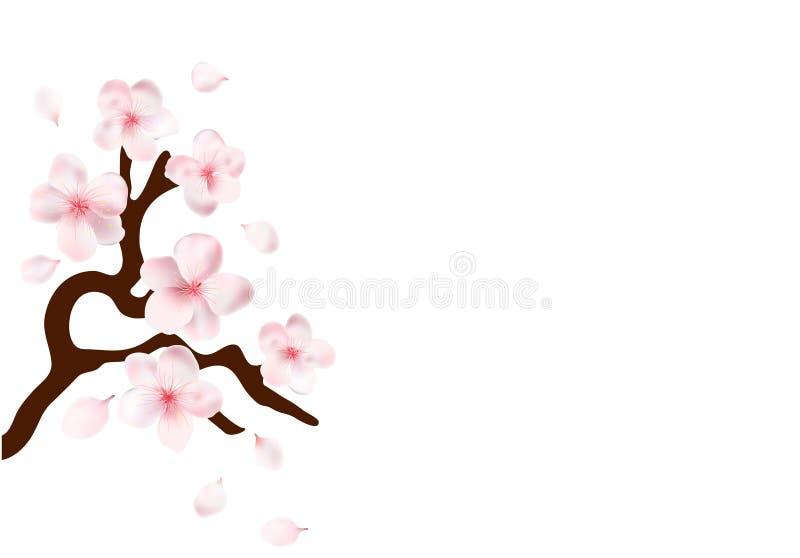 佐仓日本与开花的樱桃分支开花传染媒介例证 向量例证