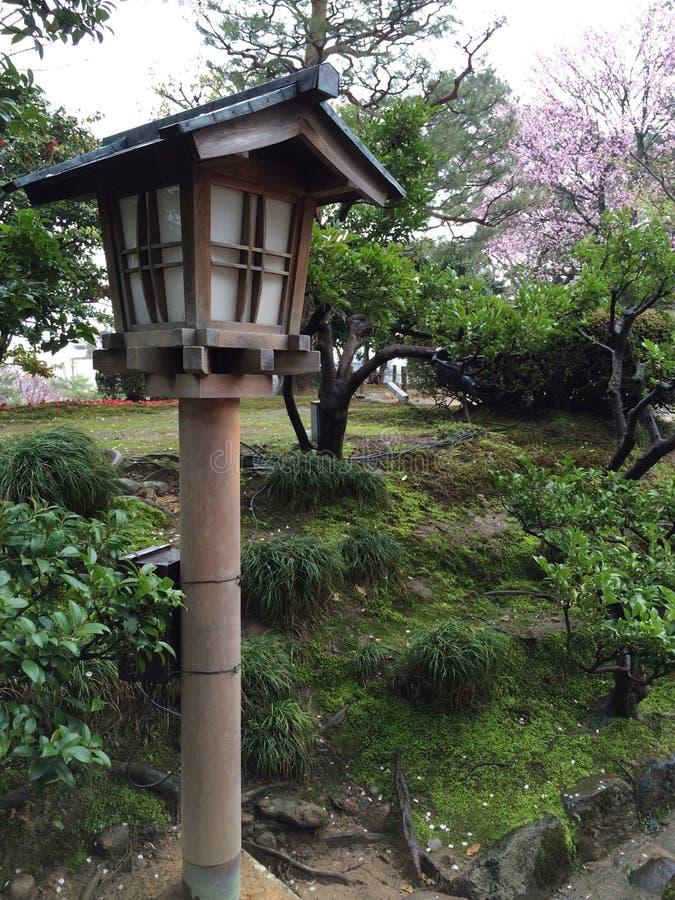 佐仓花在日本庭院里 库存图片