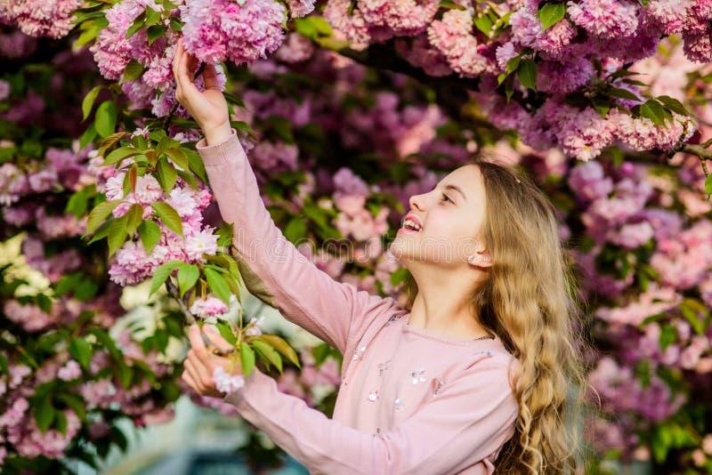 佐仓花概念 华美的花秀丽 女孩樱桃花背景 E 公园和庭院 免版税库存图片