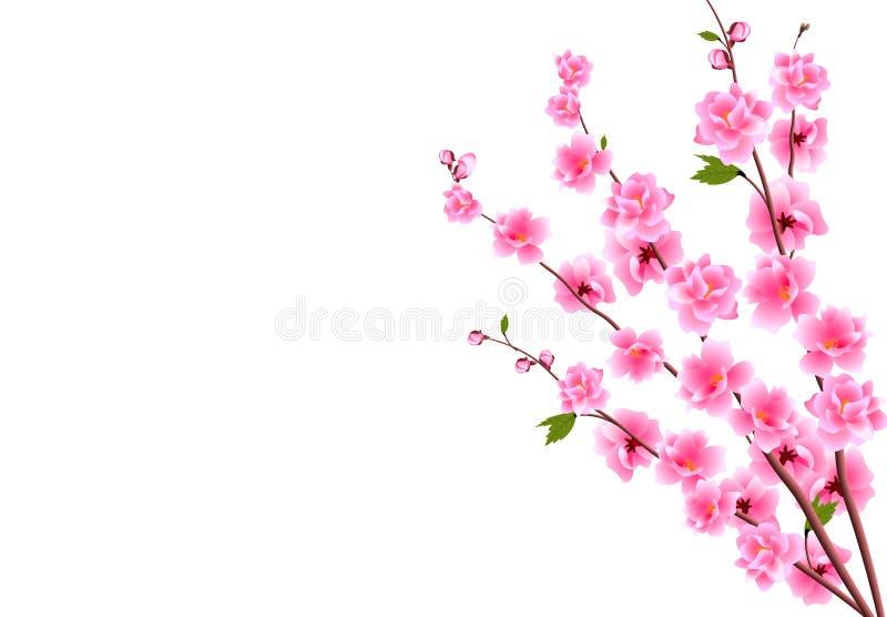 佐仓 樱桃装饰花与芽的在分支,花束 能为卡片,邀请,横幅使用 库存例证