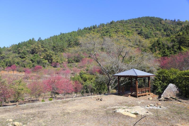 佐仓公园, zaoshui村庄, amoy城市,瓷 免版税库存图片