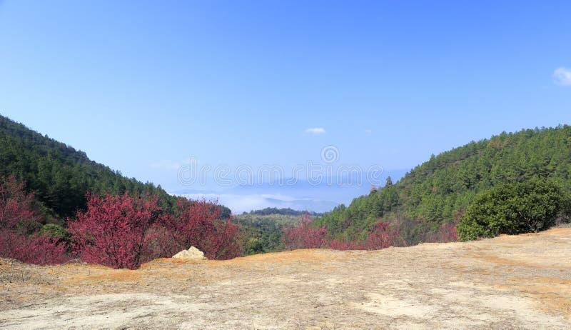 佐仓谷, zaoshui村庄, amoy城市,瓷 库存图片