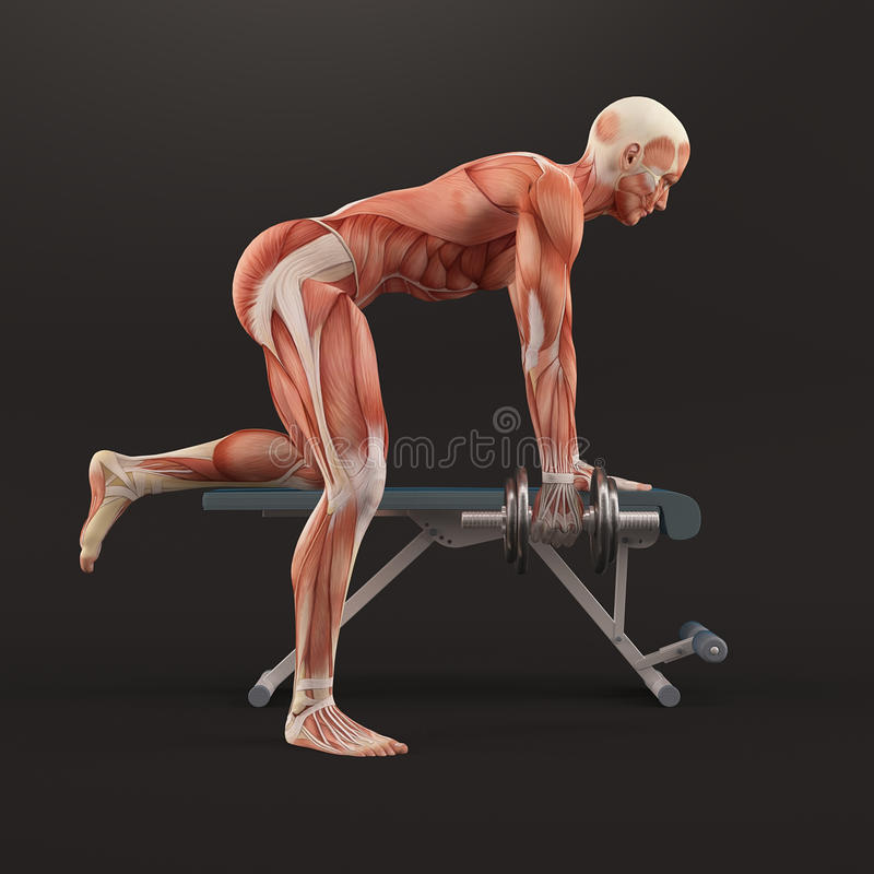 体型健身房行使 Tricep哑铃佣金 三头肌佣金 三头肌肌肉小组 库存例证