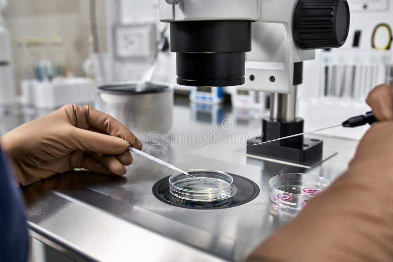 体外受精的过程在实验室 库存照片