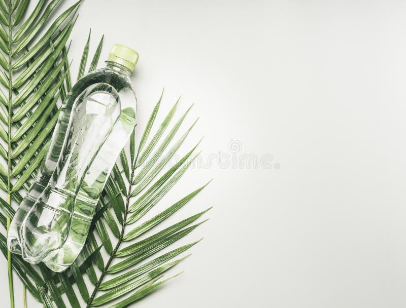 体育生活方式的概念,透明瓶用水和以热带植物为背景的绿色盒盖,文本的空间 免版税图库摄影