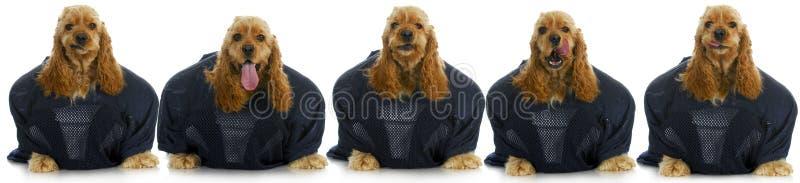 体育运动猎犬 库存照片