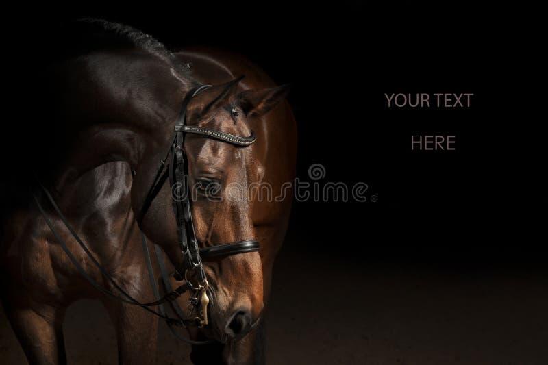 体育驯马马的画象 库存图片