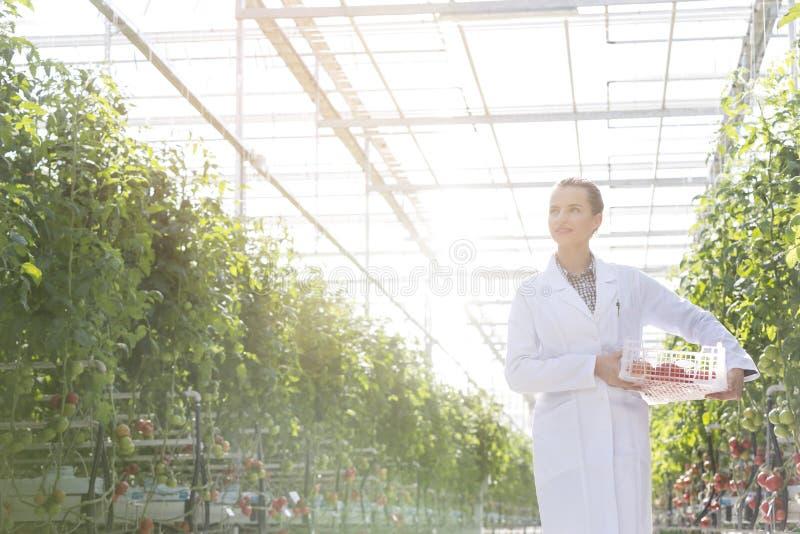 体贴的在条板箱的科学家运载的蕃茄在温室 免版税图库摄影