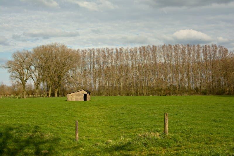 佛兰芒风景:有树棚子和线的草甸  免版税库存照片