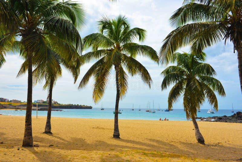 佛得角,塔拉法尔海湾海滩,在沙子,热带风景-圣地亚哥海岛的椰子树 免版税库存图片
