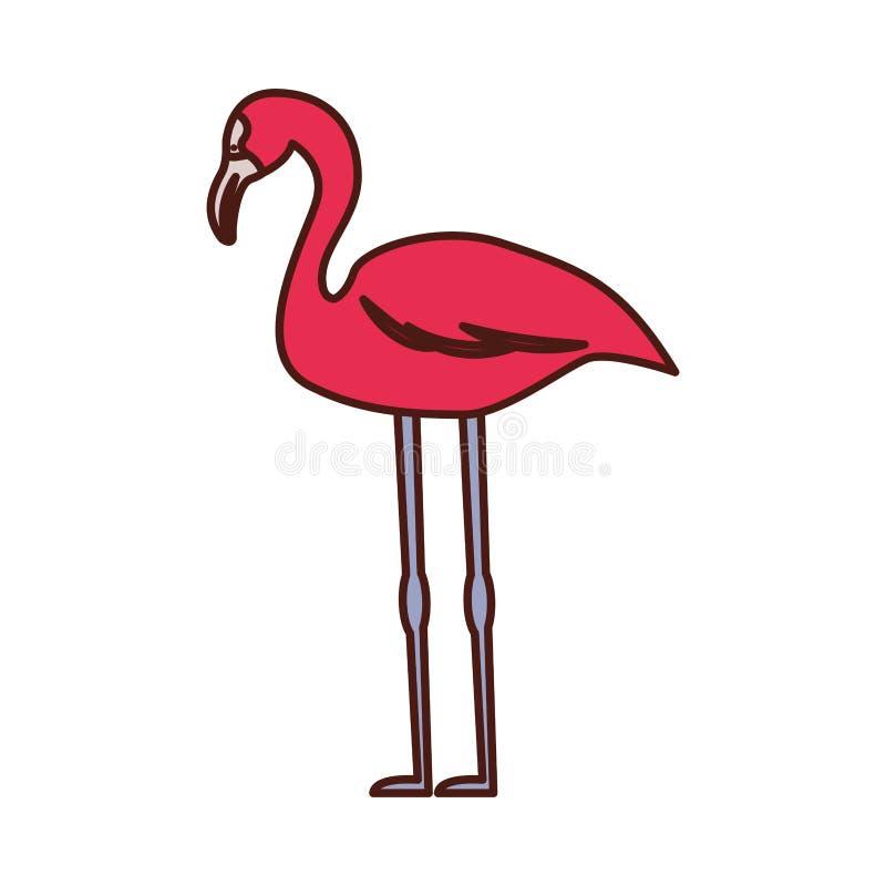 佛拉明柯舞曲异乎寻常的鸟象 库存例证