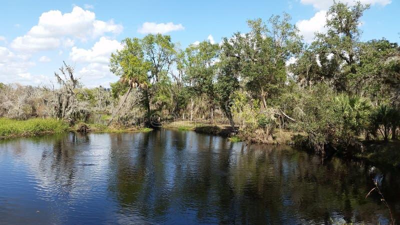 佛罗里达小河 库存照片