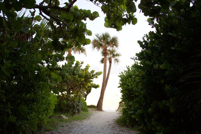佛罗里达棕榈树看法  库存图片
