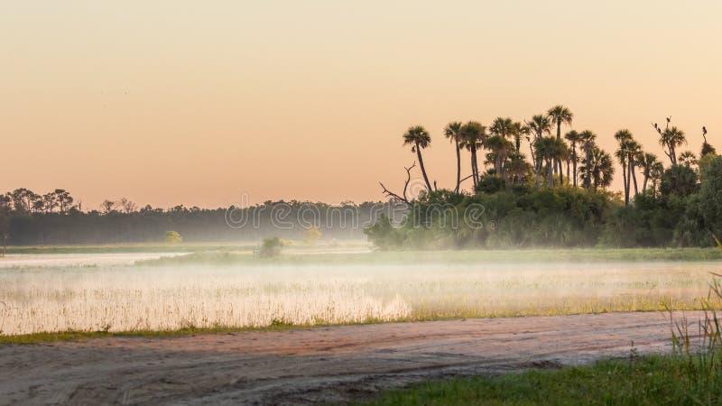 佛罗里达沼泽和沼泽在日出与雾,奥兰多沼泽地 免版税库存照片