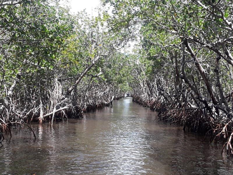 佛罗里达美洲红树沼泽地汽船乘驾 免版税库存图片