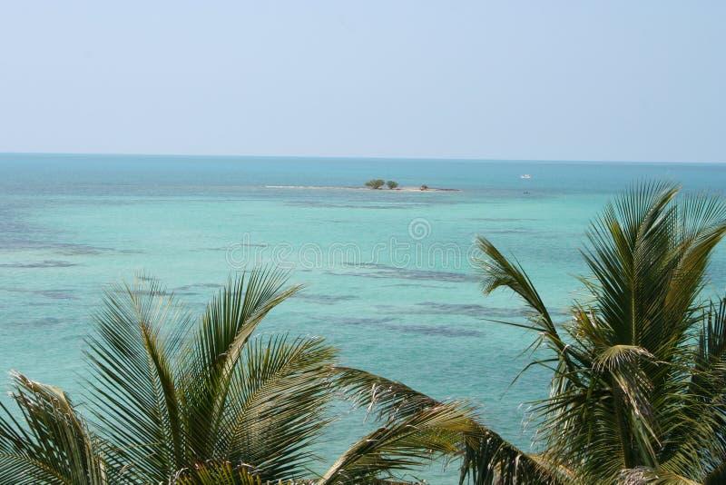 佛罗里达群岛海景棕榈和海岛 库存照片