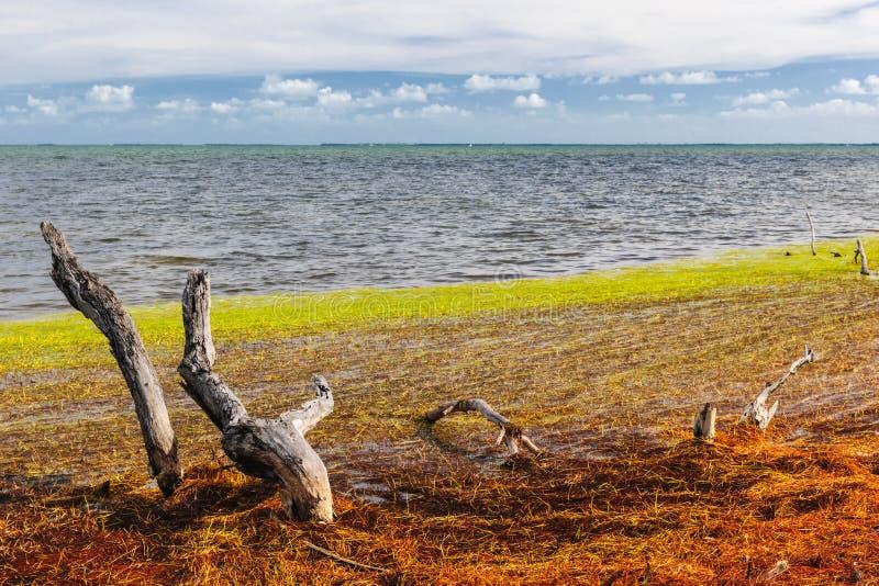 佛罗里达群岛颜色 免版税库存图片