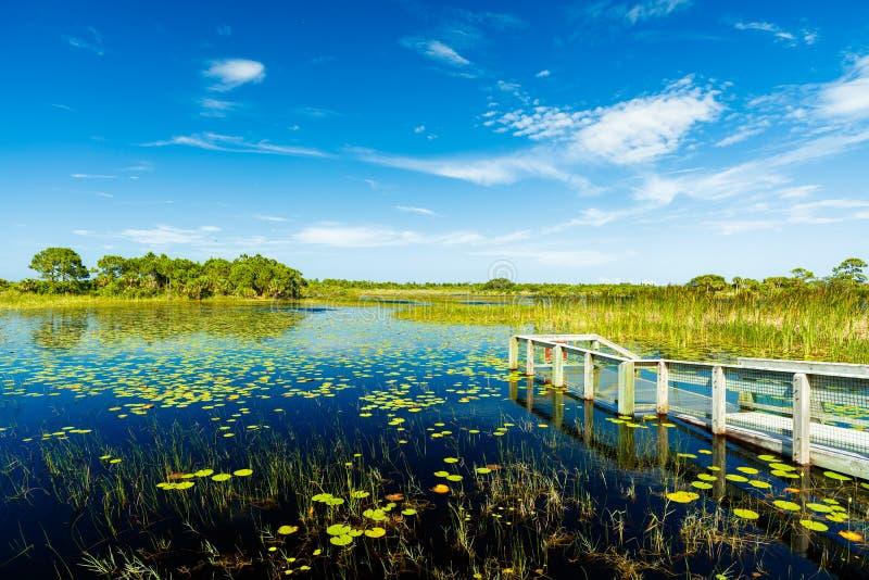 佛罗里达自然保护区 免版税库存照片