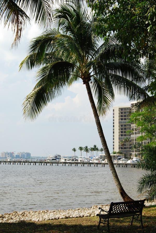佛罗里达迈尔斯堡棕榈树 免版税库存图片