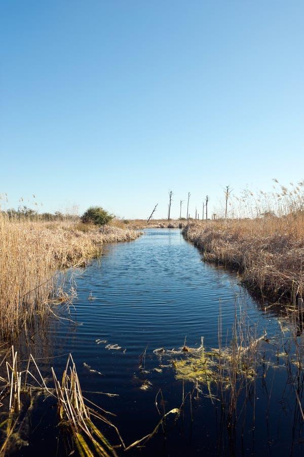 佛罗里达风景沼泽地 库存图片