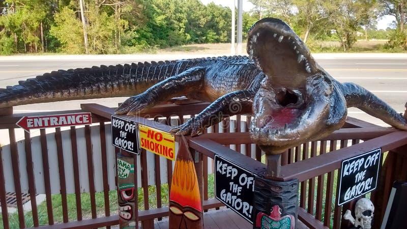 佛罗里达鳄鱼时间 免版税库存图片