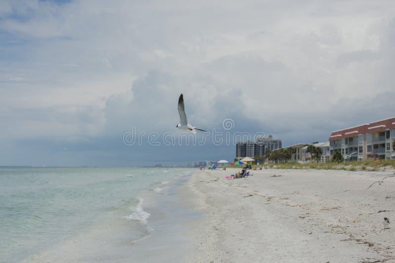 佛罗里达, Clearwater 库存照片
