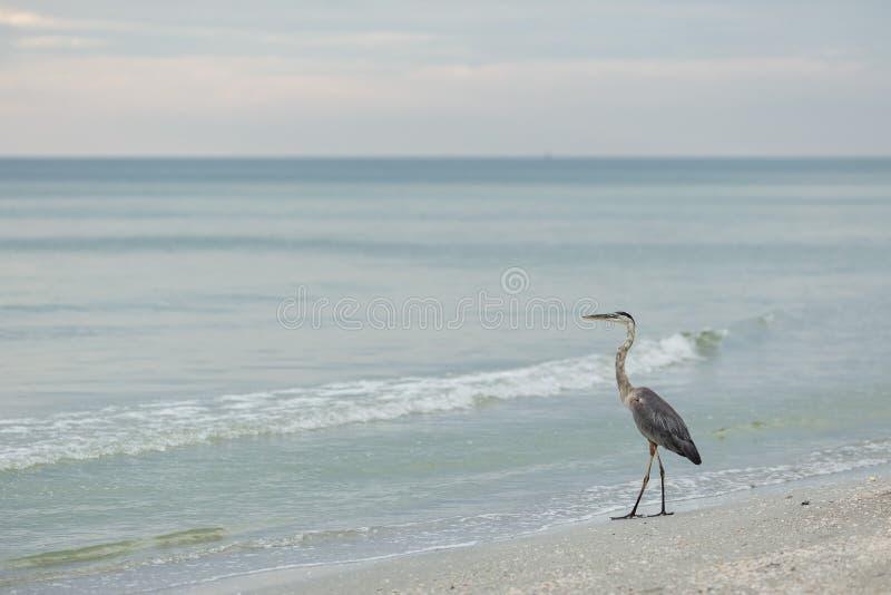 佛罗里达, Clearwater 免版税图库摄影