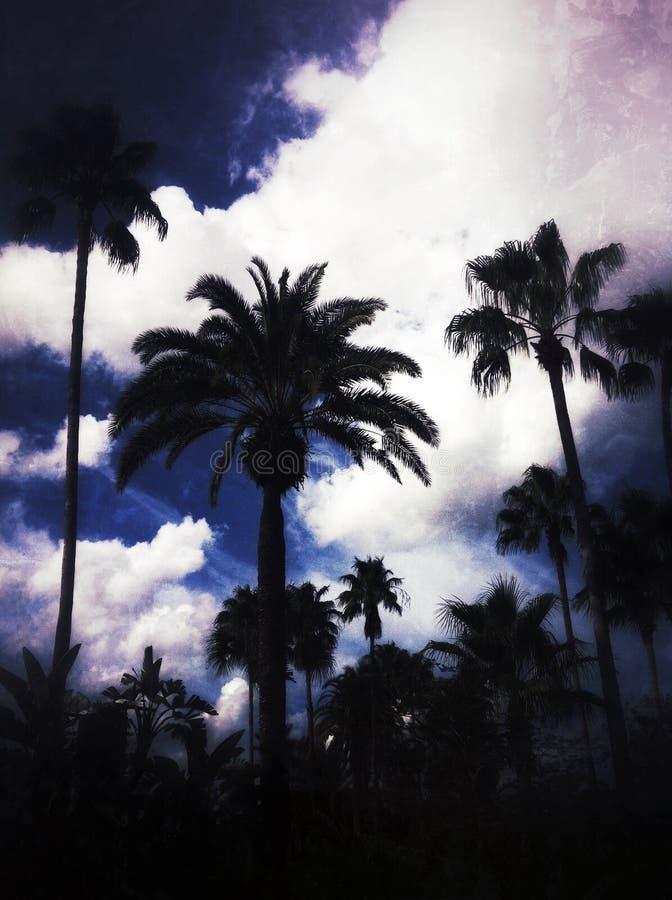 佛罗里达 免版税库存图片