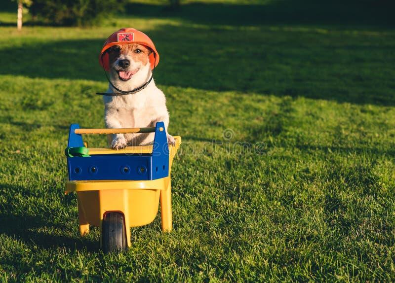 作为一名滑稽的工作者的狗佩带的安全帽有推车和工具箱的在后院草坪 免版税库存照片