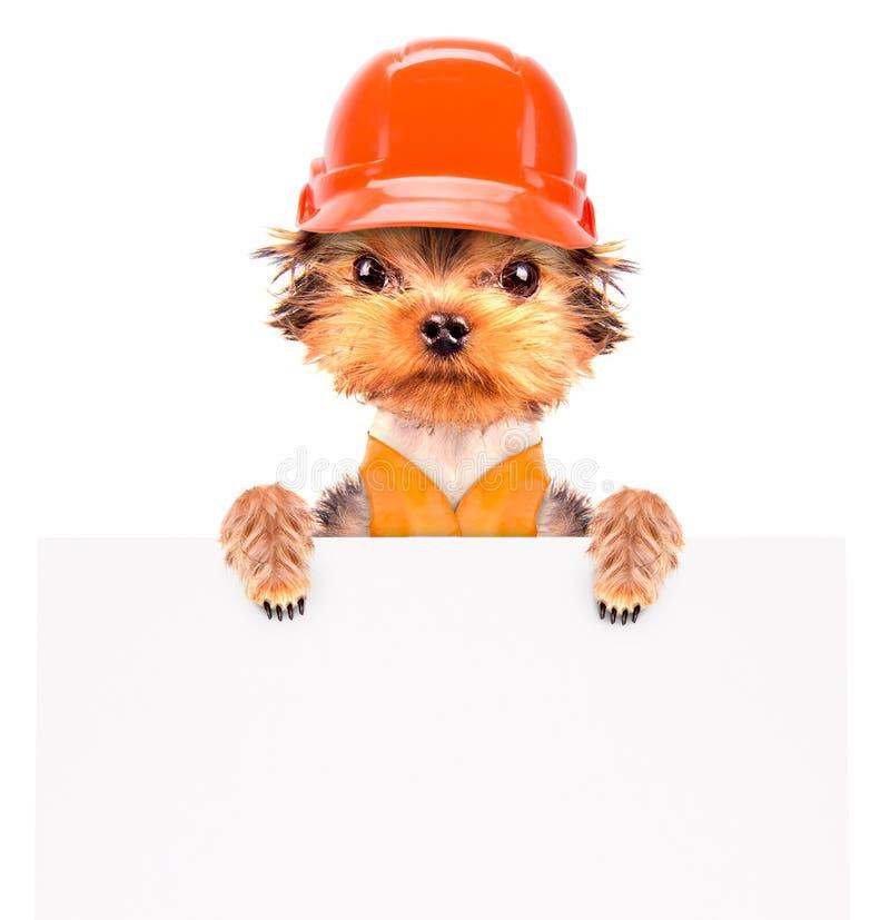 作为与横幅的建造者穿戴的狗 免版税库存图片