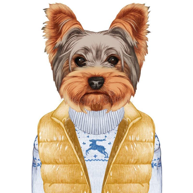 色人与动物�zf�_作为人的动物 在下来的约克夏狗授予和毛线衣 手拉的例证,数位色 id.