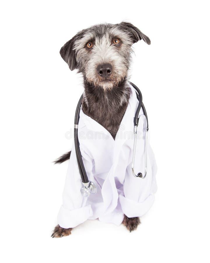 作为兽医穿戴的狗 免版税库存图片