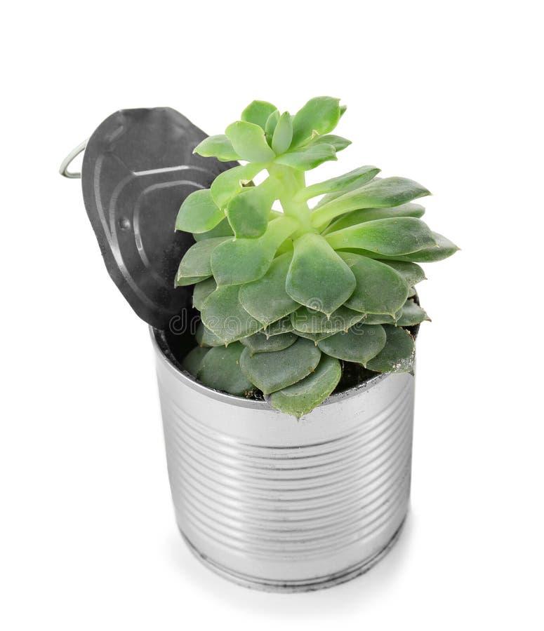 作为容器的铝罐用于生长植物 免版税图库摄影