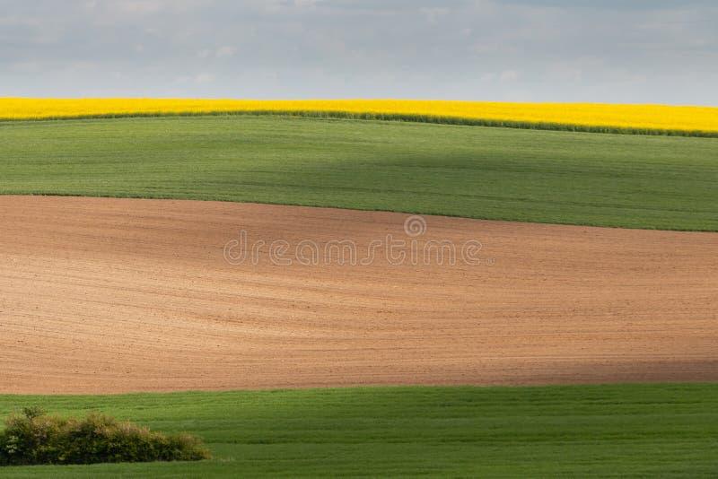 作为层数的绿色,棕色和黄色色领域 免版税图库摄影
