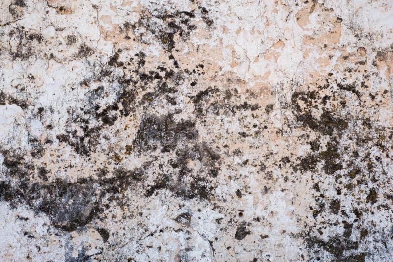 作为抽象背景纹理的老发霉的混凝土墙 库存照片