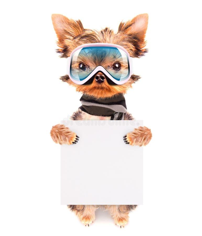 作为有横幅的滑雪者穿戴的狗 免版税库存图片