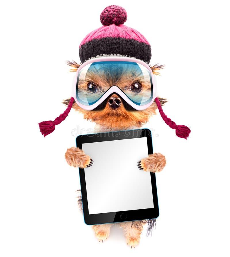 作为有片剂个人计算机的滑雪者穿戴的狗 库存照片