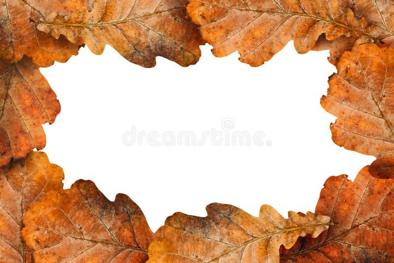 作为框架的干燥橡木叶子 图库摄影