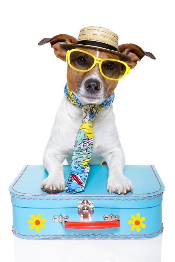 作为狗滑稽的游人 图库摄影