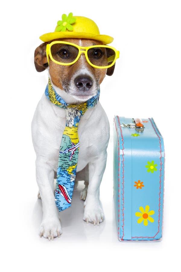 作为狗滑稽的游人 免版税库存照片
