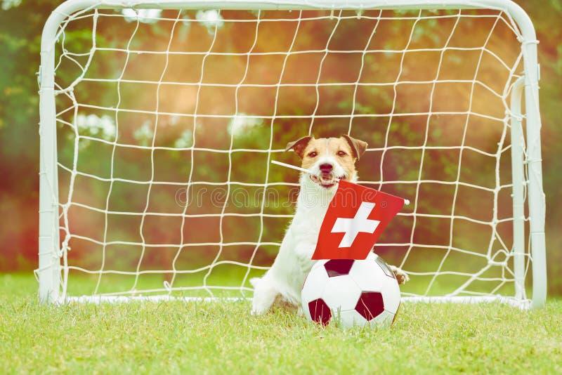 作为瑞士国家队滑稽的爱好者的狗与旗子的在国际竞争中的支持他的队 库存照片