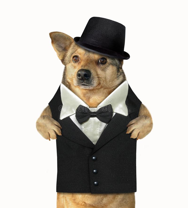 作为绅士穿戴的狗 库存照片