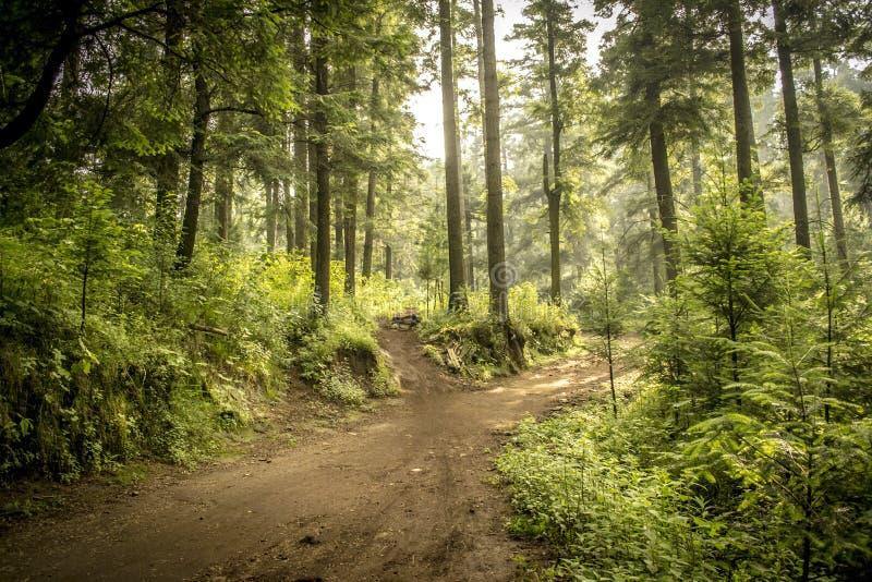 作为背景森林 使自然夏天环境美化 图库摄影