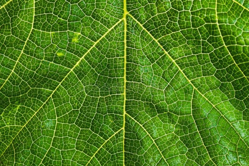 作为背景的新和绿色树叶子纹理世界地球的 免版税库存照片