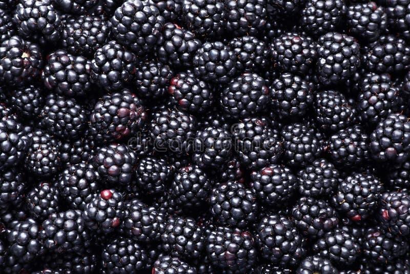 作为背景的新鲜的成熟黑莓 库存图片